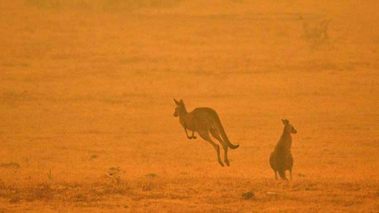Djs de todo el mundo recaudan fondos para detener los incendios en Australia